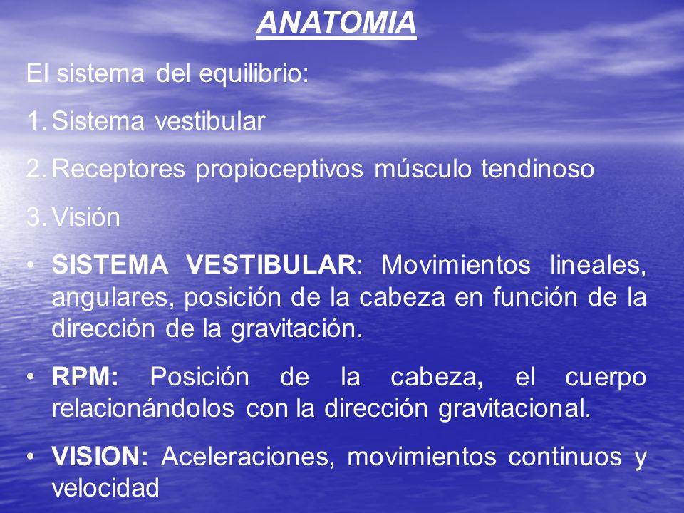 ANATOMIA El sistema del equilibrio: 1.Sistema vestibular 2.Receptores propioceptivos músculo tendinoso 3.Visión SISTEMA VESTIBULAR: Movimientos lineal