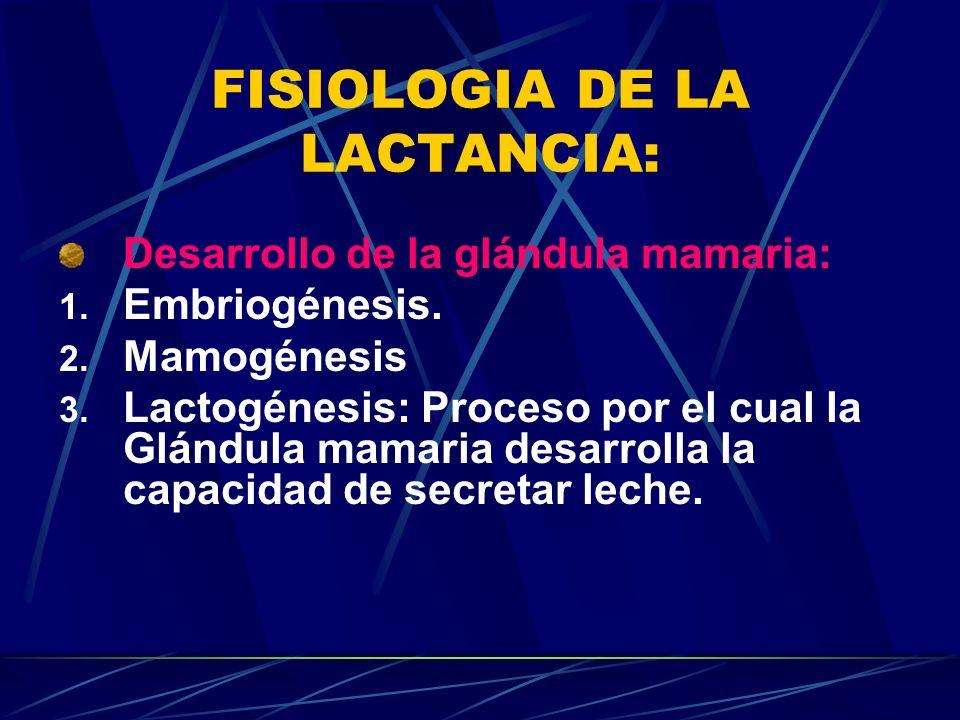 FISIOLOGIA DE LA LACTANCIA: Desarrollo de la glándula mamaria: 1. Embriogénesis. 2. Mamogénesis 3. Lactogénesis: Proceso por el cual la Glándula mamar