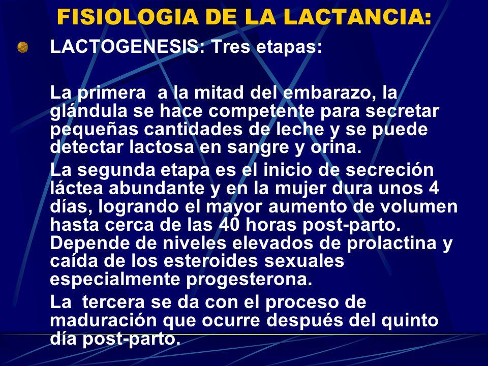 FISIOLOGIA DE LA LACTANCIA: LACTOGENESIS: Tres etapas: La primera a la mitad del embarazo, la glándula se hace competente para secretar pequeñas canti