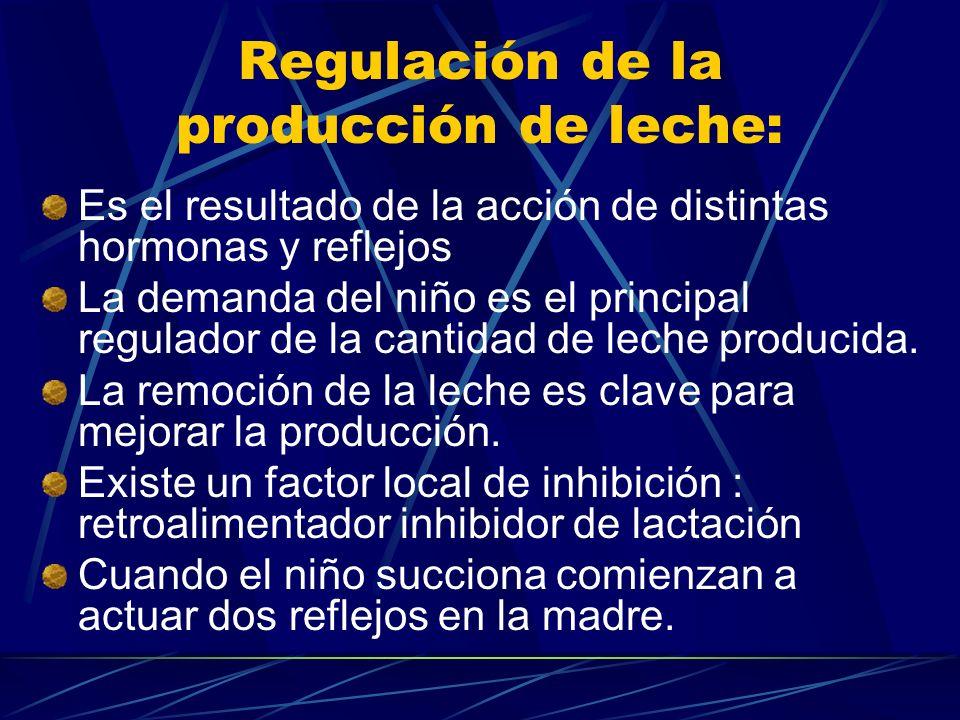 Regulación de la producción de leche: Es el resultado de la acción de distintas hormonas y reflejos La demanda del niño es el principal regulador de l