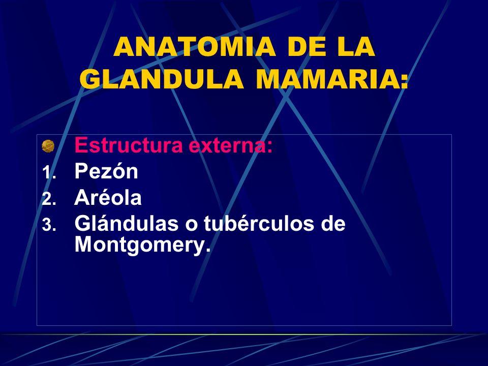 ANATOMIA DE LA GLANDULA MAMARIA: Estructura externa: 1. Pezón 2. Aréola 3. Glándulas o tubérculos de Montgomery.