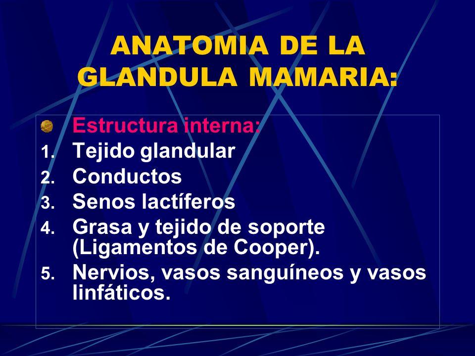 ANATOMIA DE LA GLANDULA MAMARIA: Estructura interna: 1. Tejido glandular 2. Conductos 3. Senos lactíferos 4. Grasa y tejido de soporte (Ligamentos de