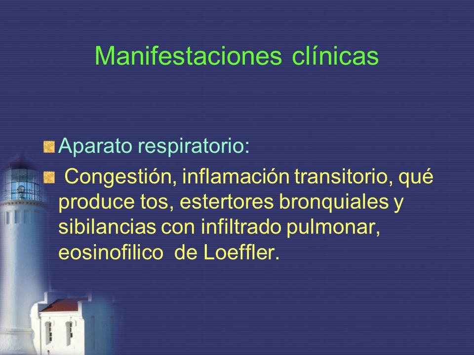 Manifestaciones clínicas Aparato respiratorio: Congestión, inflamación transitorio, qué produce tos, estertores bronquiales y sibilancias con infiltra