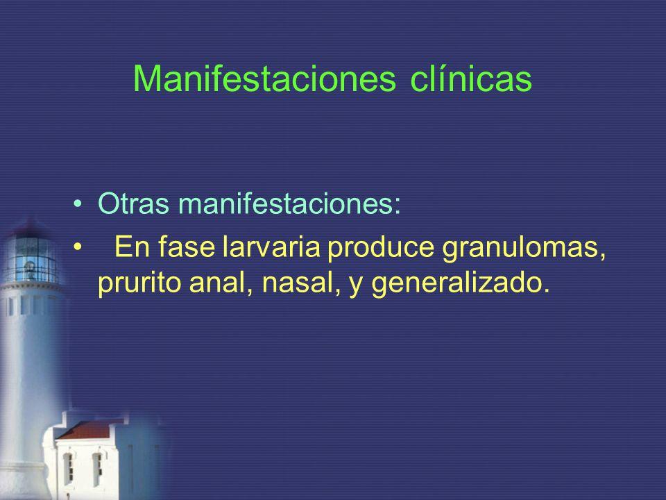 Manifestaciones clínicas Otras manifestaciones: En fase larvaria produce granulomas, prurito anal, nasal, y generalizado.