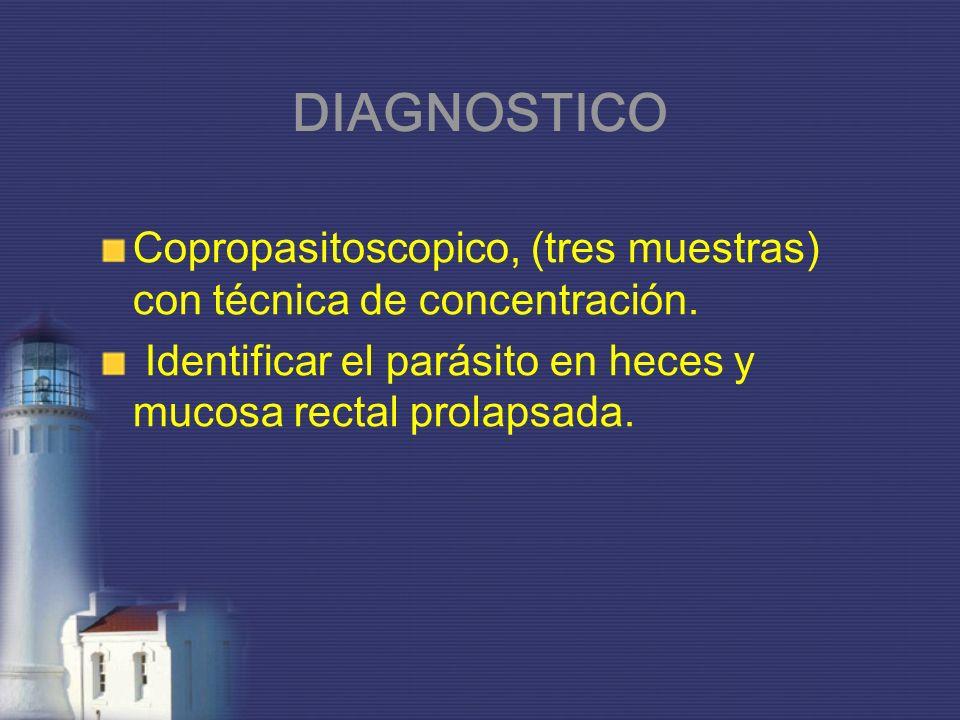 DIAGNOSTICO Copropasitoscopico, (tres muestras) con técnica de concentración. Identificar el parásito en heces y mucosa rectal prolapsada.