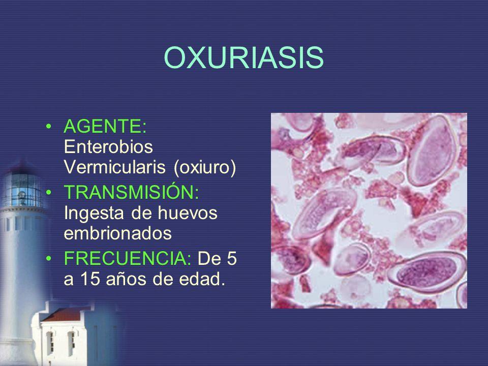 AGENTE: Enterobios Vermicularis (oxiuro) TRANSMISIÓN: Ingesta de huevos embrionados FRECUENCIA: De 5 a 15 años de edad.