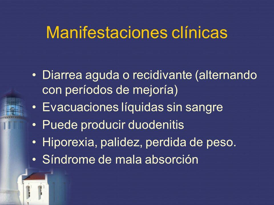 Manifestaciones clínicas Diarrea aguda o recidivante (alternando con períodos de mejoría) Evacuaciones líquidas sin sangre Puede producir duodenitis H