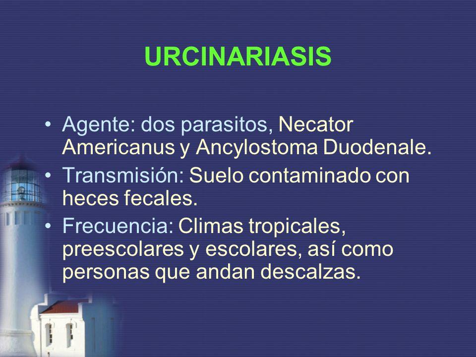 URCINARIASIS Agente: dos parasitos, Necator Americanus y Ancylostoma Duodenale. Transmisión: Suelo contaminado con heces fecales. Frecuencia: Climas t
