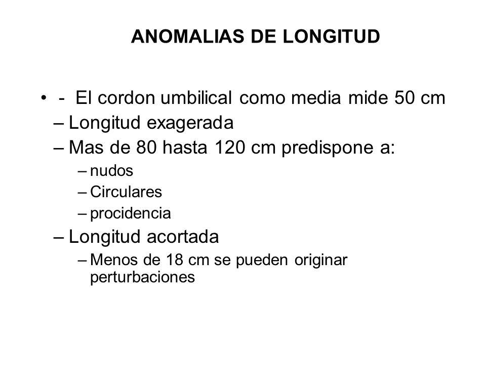 ANOMALIAS DE LONGITUD - El cordon umbilical como media mide 50 cm –Longitud exagerada –Mas de 80 hasta 120 cm predispone a: –nudos –Circulares –procid