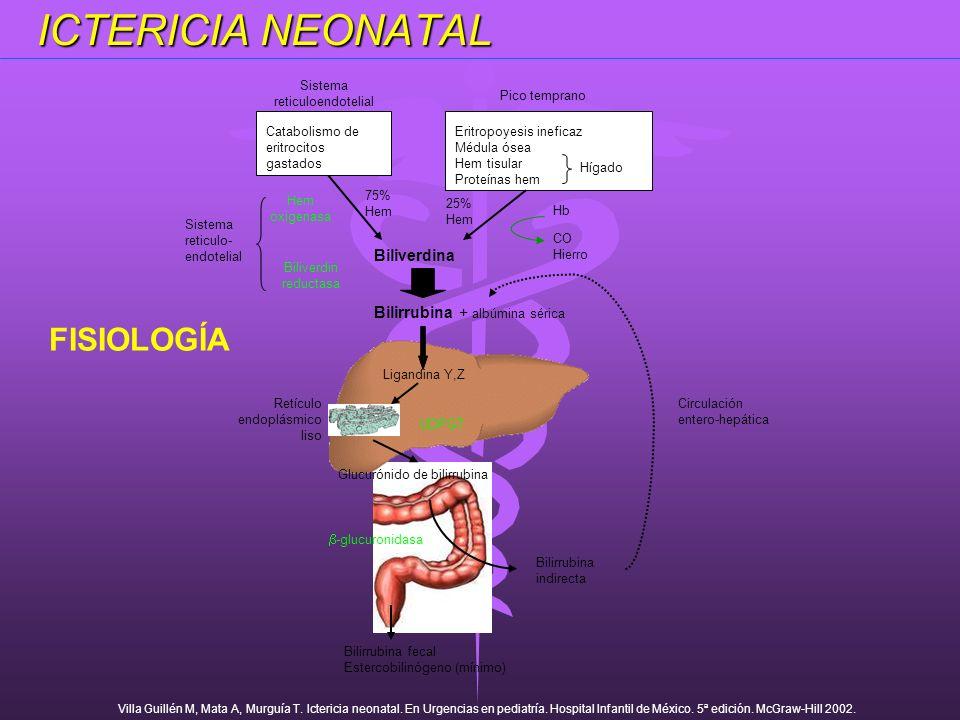 Sistema reticuloendotelial Pico temprano Catabolismo de eritrocitos gastados Eritropoyesis ineficaz Médula ósea Hem tisular Proteínas hem Hígado 75% H