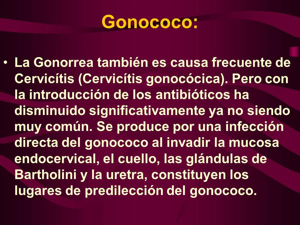 Gonococo: La Gonorrea también es causa frecuente de Cervicítis (Cervicítis gonocócica). Pero con la introducción de los antibióticos ha disminuido sig