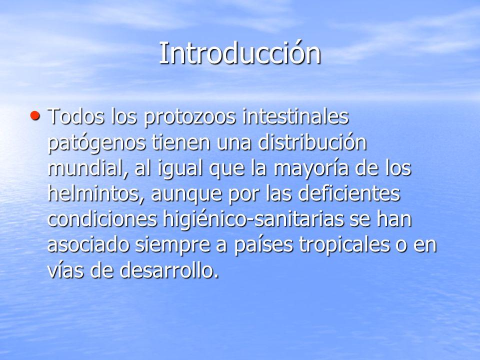 Introducción Los protozoos que infectan al ser humano se dividen a su vez en 4 phylum: Sarcodyna (incluye todas las amebas), Ciliophora (protozoos ciliados), Sporozoa (coccidios) y Mastogophora (protozoos flagelados).