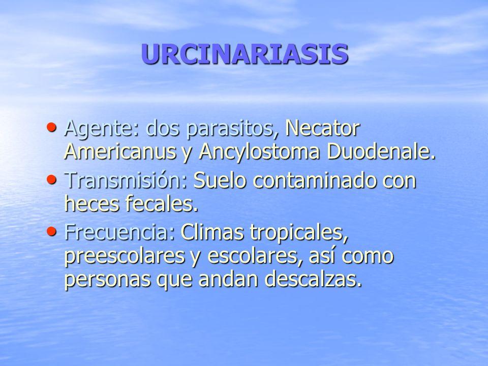 URCINARIASIS Agente: dos parasitos, Necator Americanus y Ancylostoma Duodenale. Agente: dos parasitos, Necator Americanus y Ancylostoma Duodenale. Tra