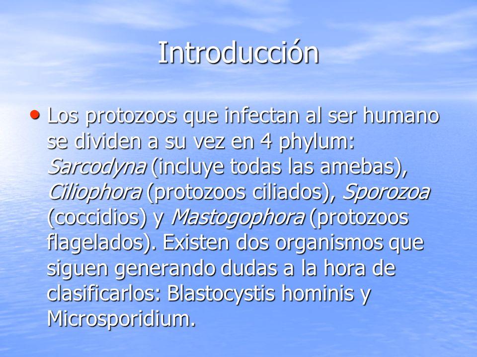 Introducción Los protozoos que infectan al ser humano se dividen a su vez en 4 phylum: Sarcodyna (incluye todas las amebas), Ciliophora (protozoos cil