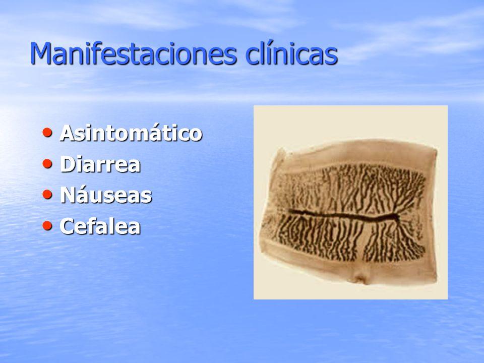 Manifestaciones clínicas Asintomático Asintomático Diarrea Diarrea Náuseas Náuseas Cefalea Cefalea