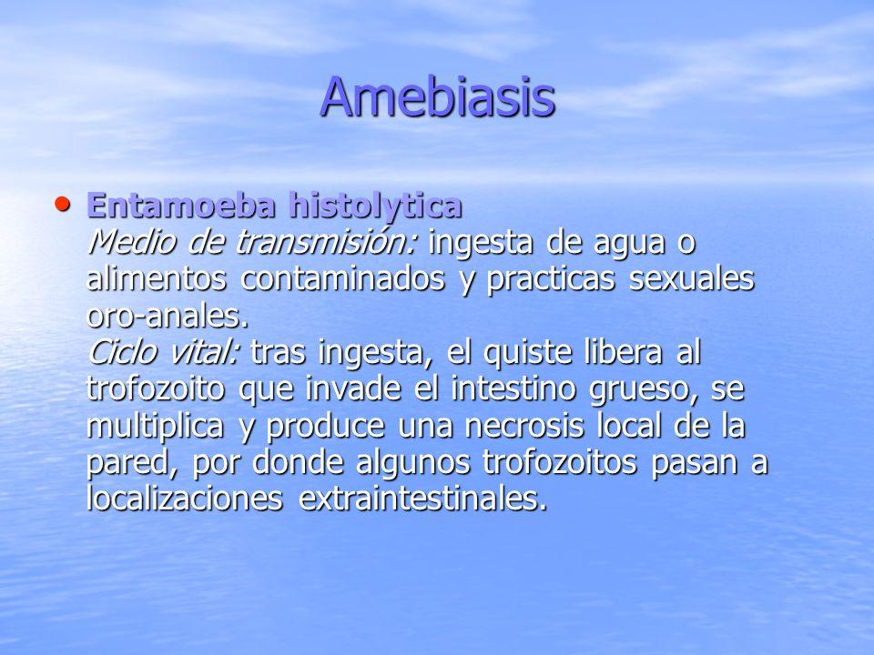 Amebiasis Entamoeba histolytica Medio de transmisión: ingesta de agua o alimentos contaminados y practicas sexuales oro-anales. Ciclo vital: tras inge