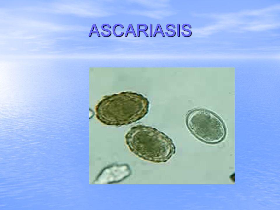 MANIFESTACIONES CLINICAS Cifras de huevecillos < de 5000 por gramo de heces = asintomático.