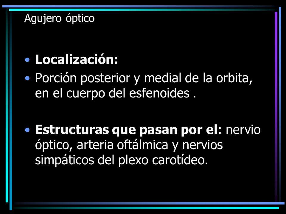 Agujero óptico Localización: Porción posterior y medial de la orbita, en el cuerpo del esfenoides. Estructuras que pasan por el: nervio óptico, arteri