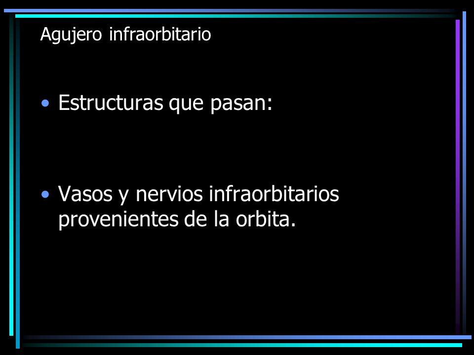 Agujero infraorbitario Estructuras que pasan: Vasos y nervios infraorbitarios provenientes de la orbita.