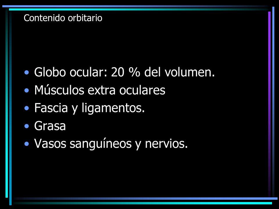 Contenido orbitario Globo ocular: 20 % del volumen. Músculos extra oculares Fascia y ligamentos. Grasa Vasos sanguíneos y nervios.