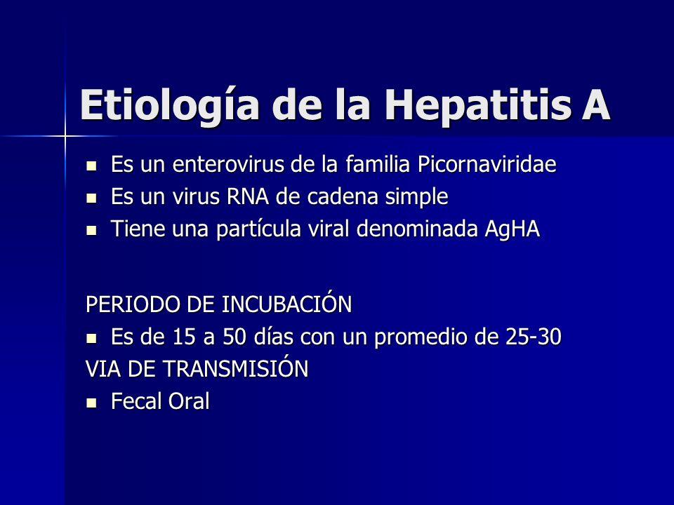 Etiología de la Hepatitis A Es un enterovirus de la familia Picornaviridae Es un enterovirus de la familia Picornaviridae Es un virus RNA de cadena si