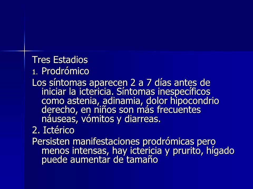 Tres Estadios 1. Prodrómico Los síntomas aparecen 2 a 7 días antes de iniciar la ictericia. Síntomas inespecíficos como astenia, adinamia, dolor hipoc