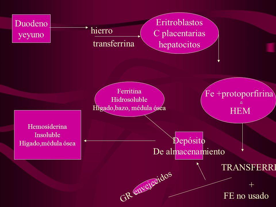Duodeno yeyuno transferrina hierro Eritroblastos C placentarias hepatocitos Fe +protoporfirina HEM TRANSFERRINA + FE no usado Depósito De almacenamien