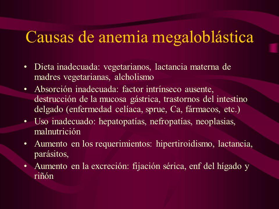 Causas de anemia megaloblástica Dieta inadecuada: vegetarianos, lactancia materna de madres vegetarianas, alcholismo Absorción inadecuada: factor intr