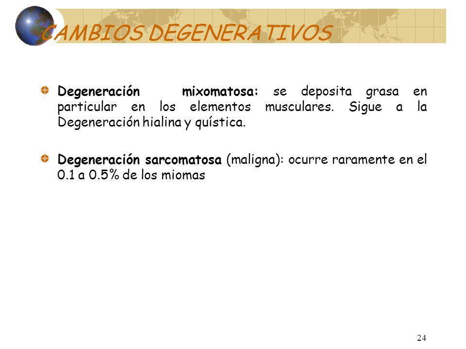 23 CAMBIOS DEGENERATIVOS Degeneración calcárea: Frecuente en postmenopáusicas, en miomas subserosos, causada por obstrucción circulatoria, que provoca