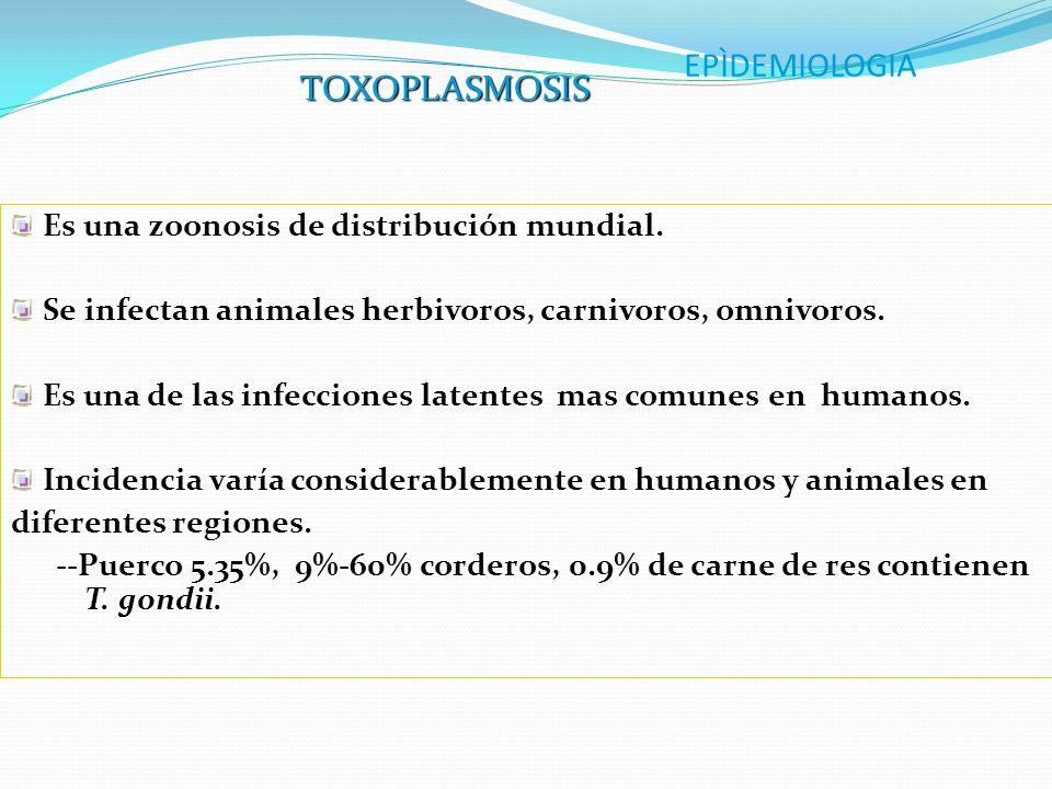 EPÌDEMIOLOGIA Es una zoonosis de distribución mundial. Se infectan animales herbivoros, carnivoros, omnivoros. Es una de las infecciones latentes mas