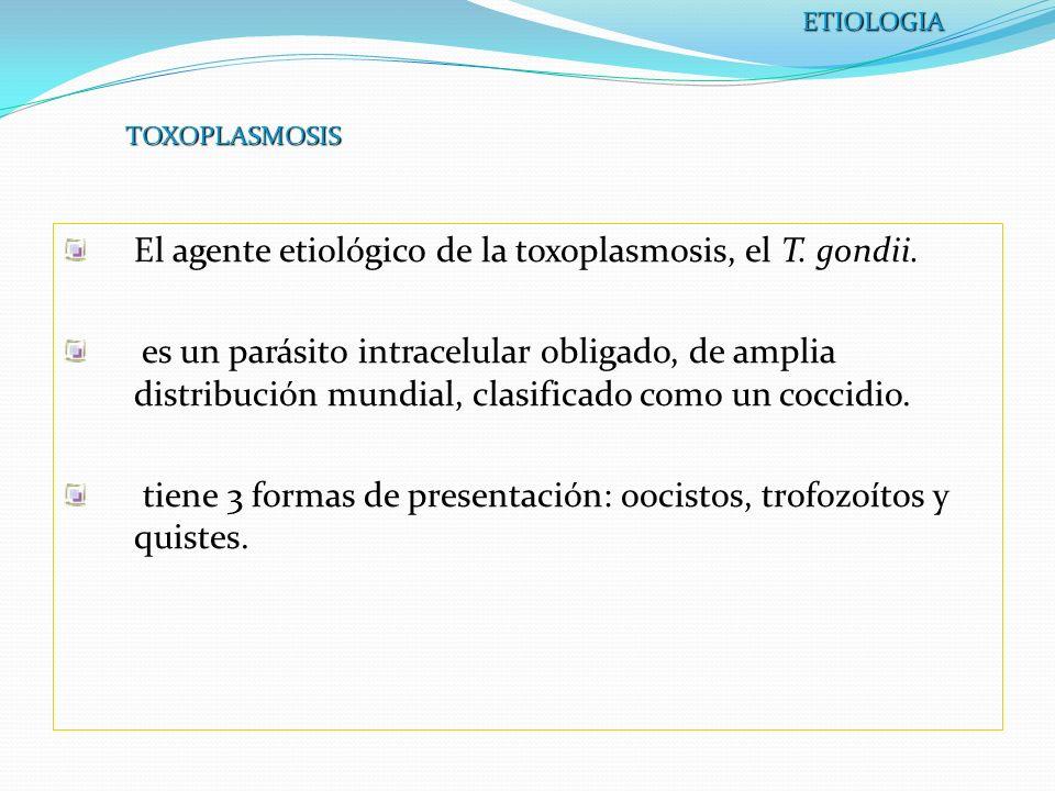 TOXOPLASMOSIS El agente etiológico de la toxoplasmosis, el T. gondii. es un parásito intracelular obligado, de amplia distribución mundial, clasificad
