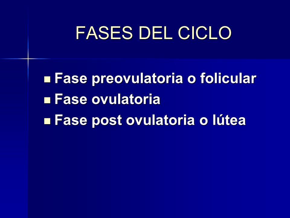 FASES DEL CICLO Fase preovulatoria o folicular Fase preovulatoria o folicular Fase ovulatoria Fase ovulatoria Fase post ovulatoria o lútea Fase post o