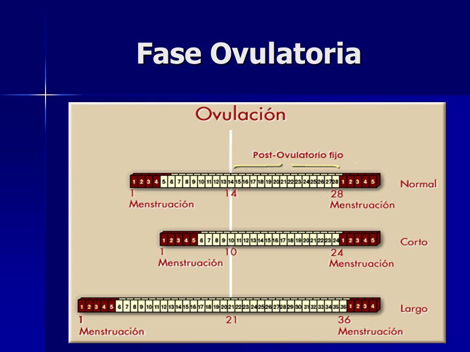Fase Ovulatoria