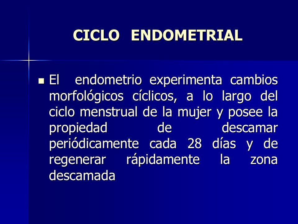 CICLO ENDOMETRIAL El endometrio experimenta cambios morfológicos cíclicos, a lo largo del ciclo menstrual de la mujer y posee la propiedad de descamar periódicamente cada 28 días y de regenerar rápidamente la zona descamada El endometrio experimenta cambios morfológicos cíclicos, a lo largo del ciclo menstrual de la mujer y posee la propiedad de descamar periódicamente cada 28 días y de regenerar rápidamente la zona descamada