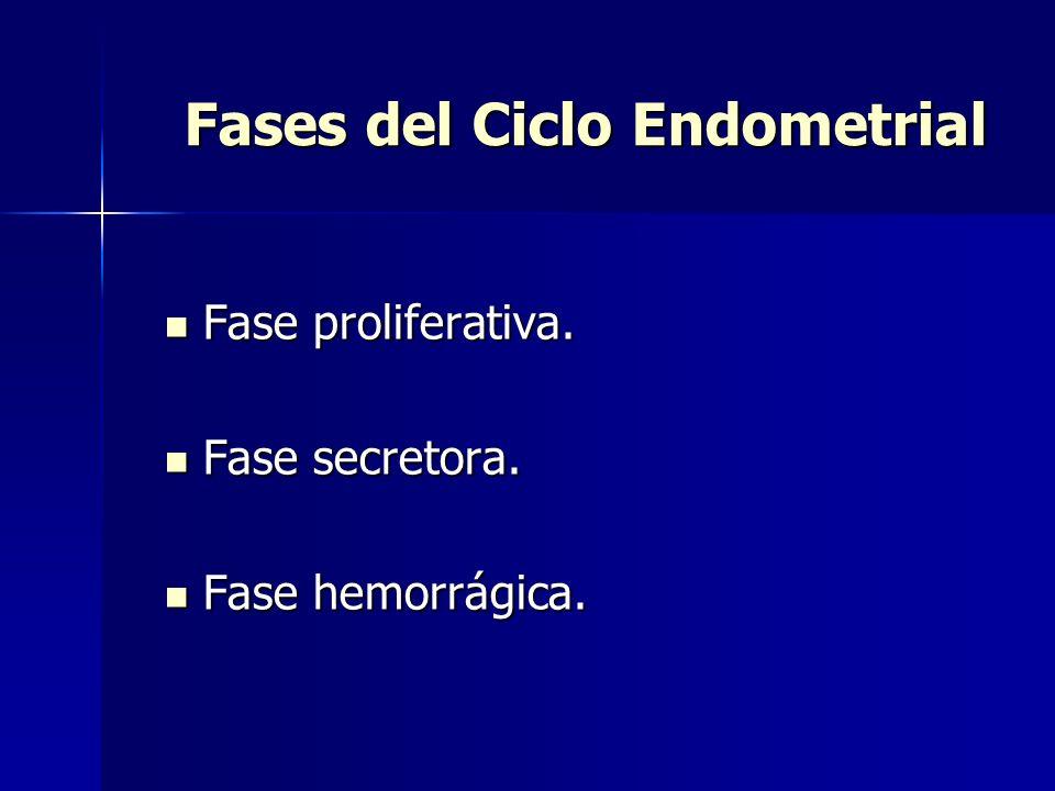 Fases del Ciclo Endometrial Fase proliferativa.Fase proliferativa.