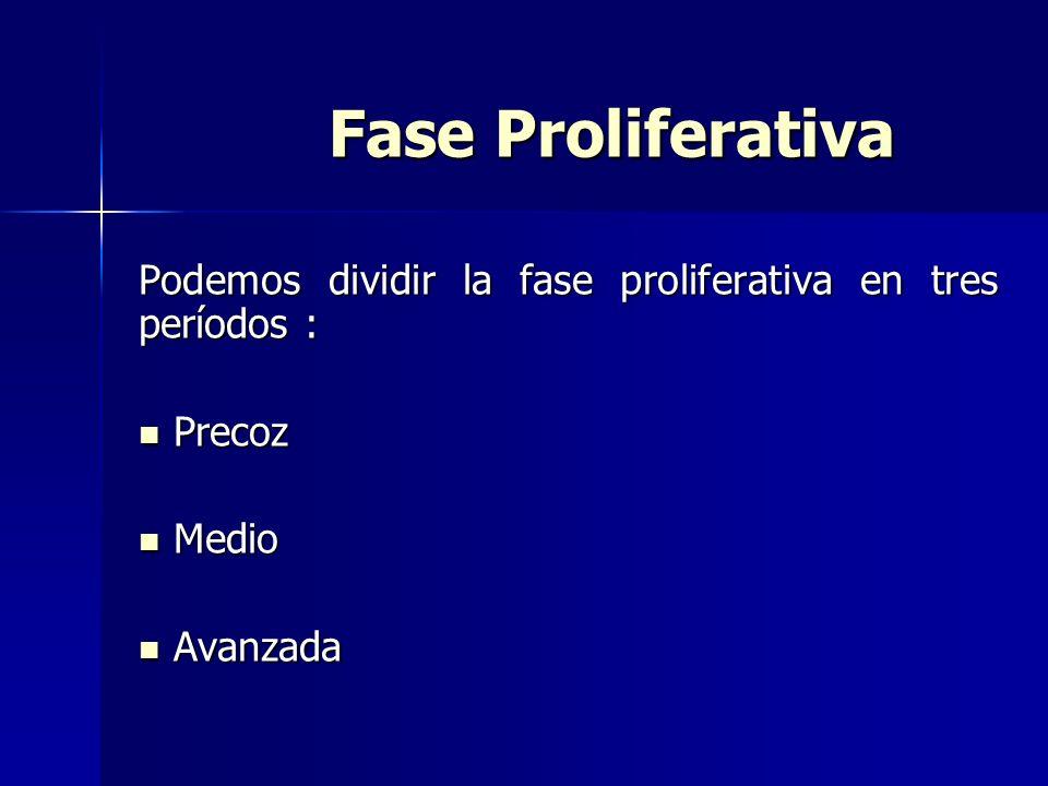 Fase Proliferativa Fase Proliferativa Podemos dividir la fase proliferativa en tres períodos : Precoz Precoz Medio Medio Avanzada Avanzada