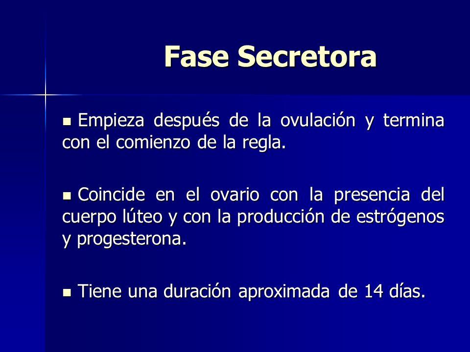 Fase Secretora Empieza después de la ovulación y termina con el comienzo de la regla.