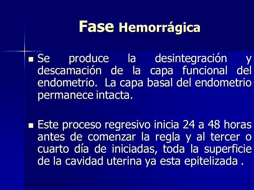 Fase Hemorrágica Se produce la desintegración y descamación de la capa funcional del endometrio. La capa basal del endometrio permanece intacta. Se pr
