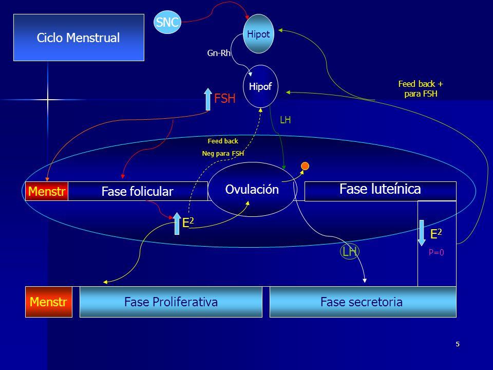 5 Fase folicular Fase luteínica Ovulación Fase secretoria Fase Proliferativa Menstr E 2 P=0 Feed back + para FSH Hipot Hipof FSH E2E2 Feed back Neg para FSH Gn-Rh LH SNC Ciclo Menstrual