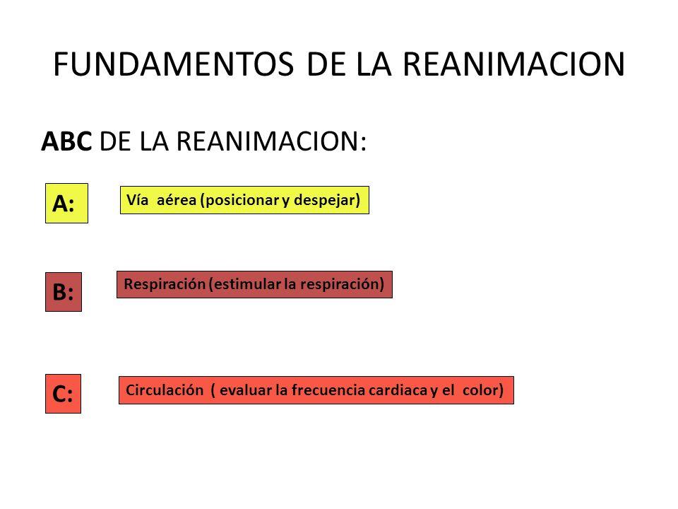 FUNDAMENTOS DE LA REANIMACION ABC DE LA REANIMACION: A: Vía aérea (posicionar y despejar) B: Respiración (estimular la respiración) C: Circulación ( e