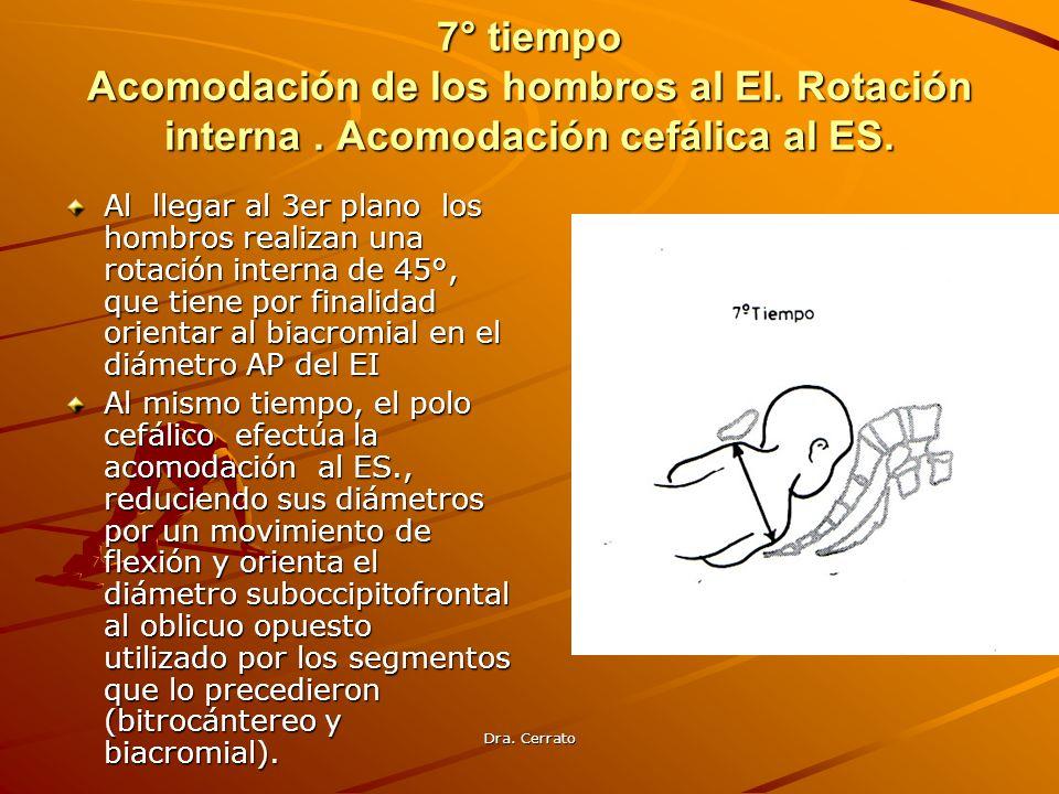 Dra. Cerrato 7° tiempo Acomodación de los hombros al EI. Rotación interna. Acomodación cefálica al ES. Al llegar al 3er plano los hombros realizan una