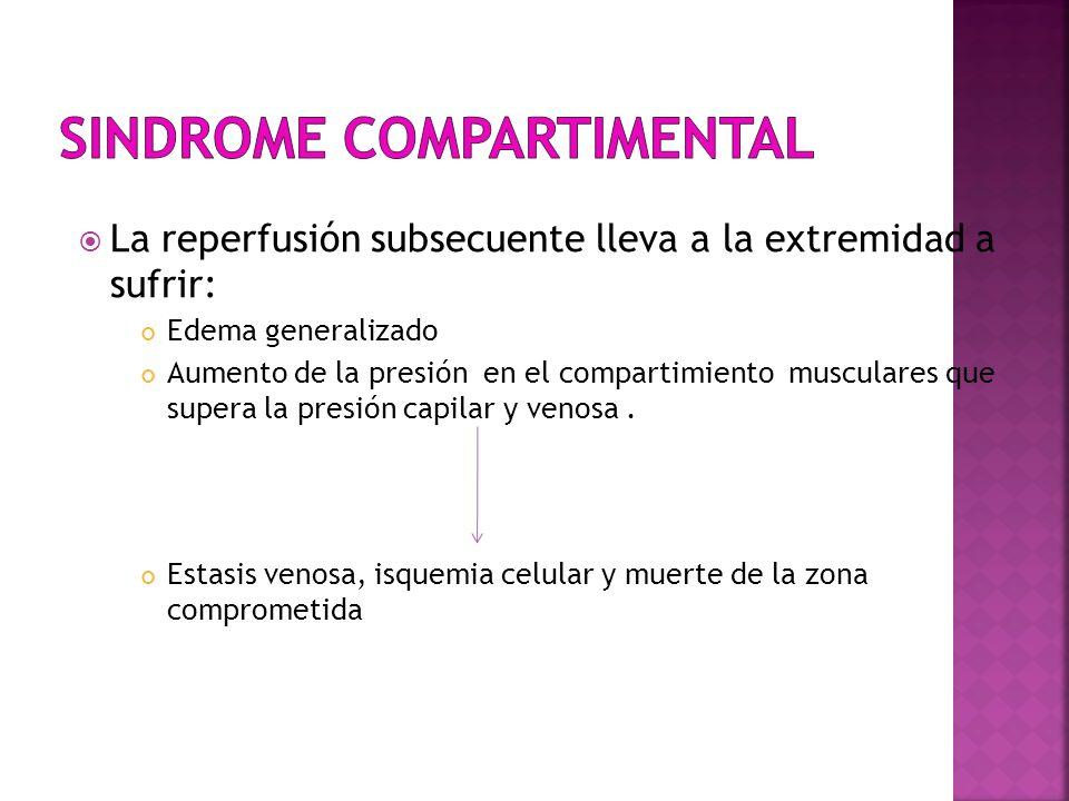 La reperfusión subsecuente lleva a la extremidad a sufrir: Edema generalizado Aumento de la presión en el compartimiento musculares que supera la pres