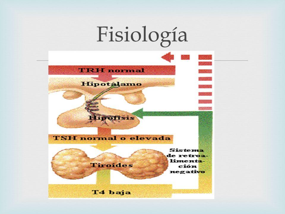 INTRODUCCIÓN La disfunción tiroidea pasa desapercibida debido a sus escasas manifestaciones.