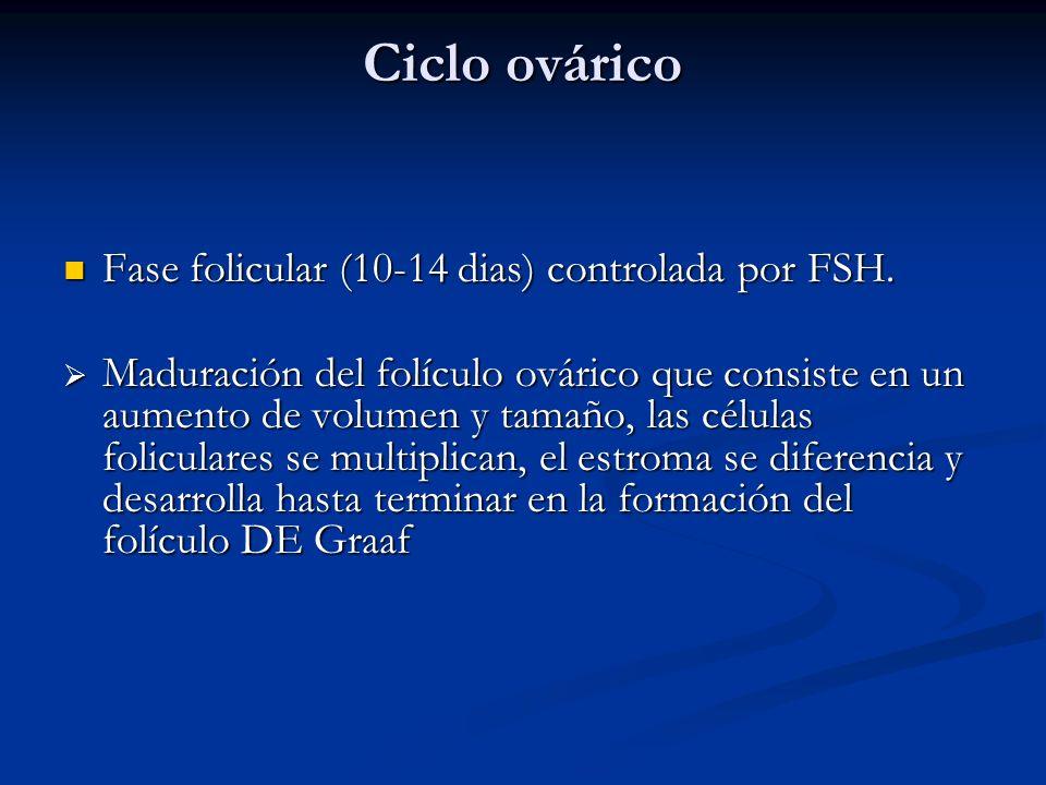Ciclo ovárico Fase folicular (10-14 dias) controlada por FSH. Fase folicular (10-14 dias) controlada por FSH. Maduración del folículo ovárico que cons