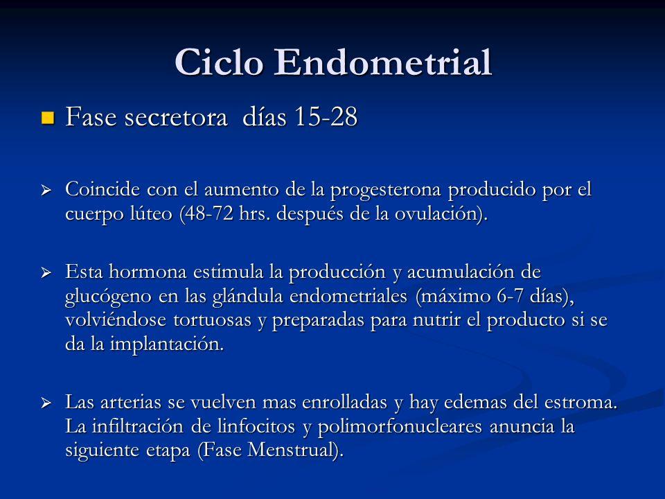 Ciclo Endometrial Fase secretora días 15-28 Fase secretora días 15-28 Coincide con el aumento de la progesterona producido por el cuerpo lúteo (48-72
