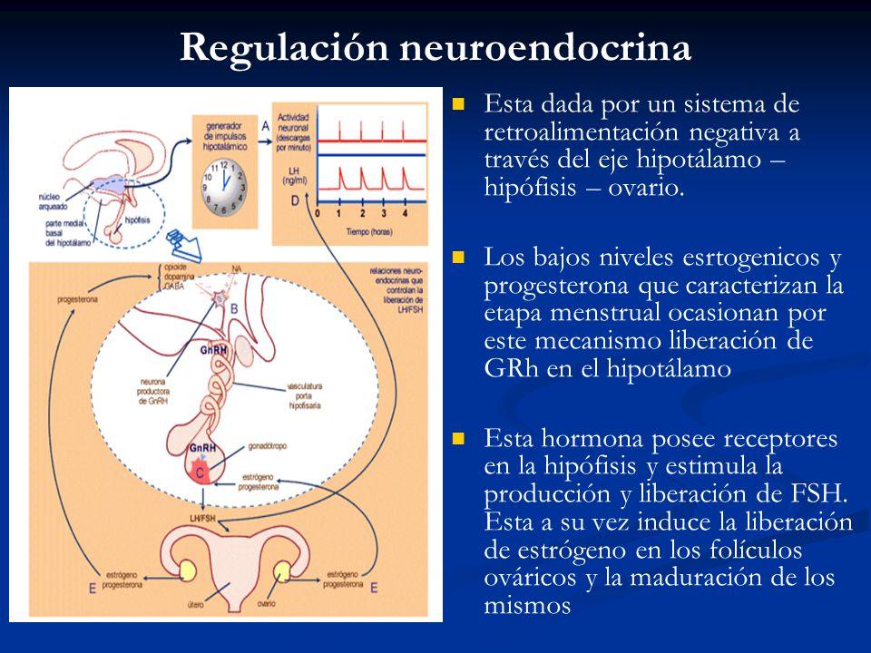 Regulación neuroendocrina Esta dada por un sistema de retroalimentación negativa a través del eje hipotálamo – hipófisis – ovario. Los bajos niveles e