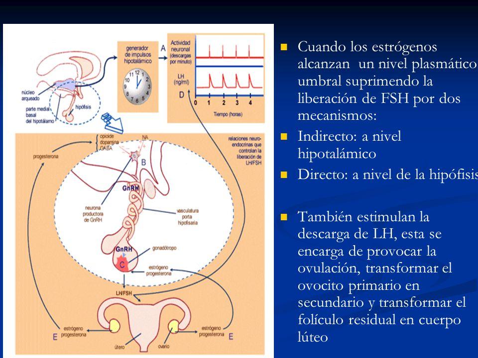 Cuando los estrógenos alcanzan un nivel plasmático umbral suprimendo la liberación de FSH por dos mecanismos: Indirecto: a nivel hipotalámico Directo: