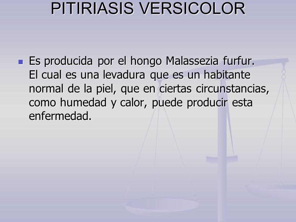 PITIRIASIS VERSICOLOR Es producida por el hongo Malassezia furfur. El cual es una levadura que es un habitante normal de la piel, que en ciertas circu