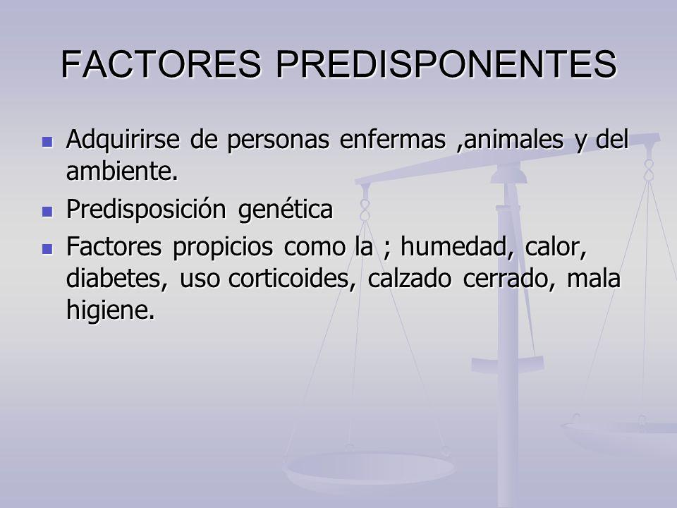 FACTORES PREDISPONENTES Adquirirse de personas enfermas,animales y del ambiente. Adquirirse de personas enfermas,animales y del ambiente. Predisposici