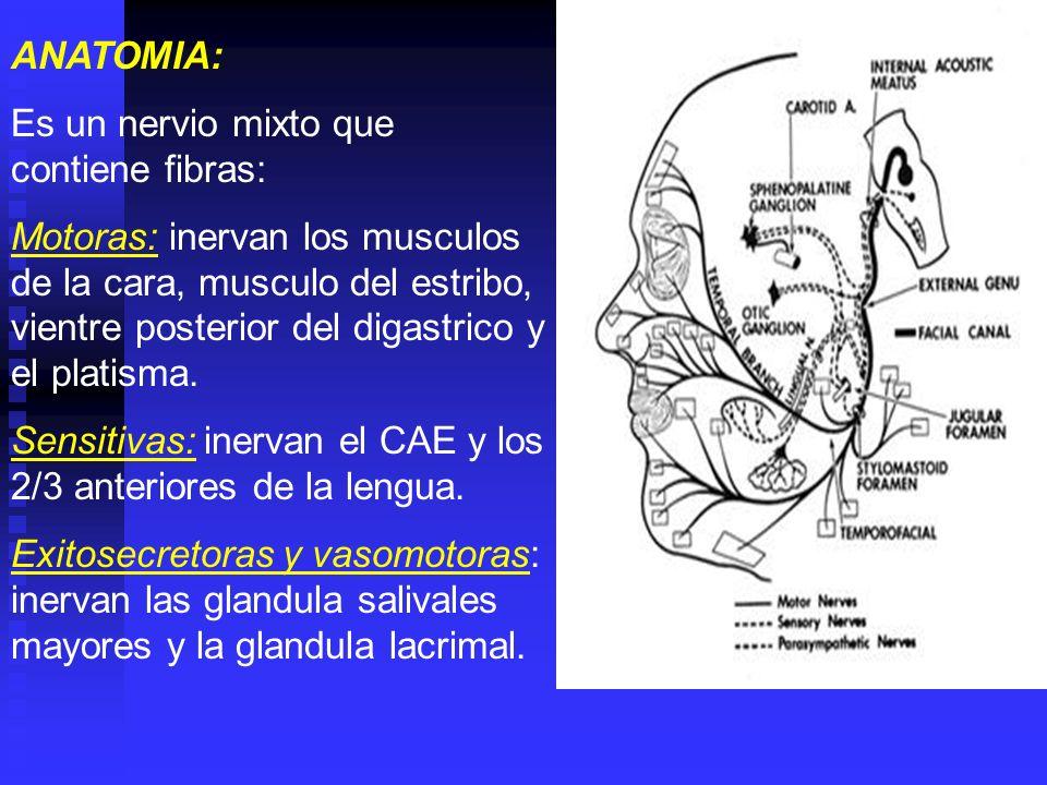 El nucleo del nervio facial se encuentra cerca del piso del IV ventriculo, en la protuberancia anular recibe fibras motoras a traves del haz piramidal que provienen de la corteza cerebral del lobulo frontal, decusandose la mayoría de fibras a nivel de los pedúnculos cerebrales, terminando en el núcleo facial contralateral, y solo los hazes directos terminan en el núcleo facial homolateral.